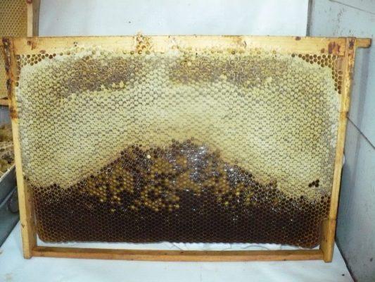 rama cu miere capacita